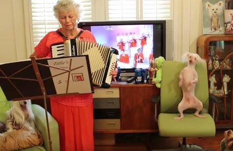 Hairless Dog Dancing polka