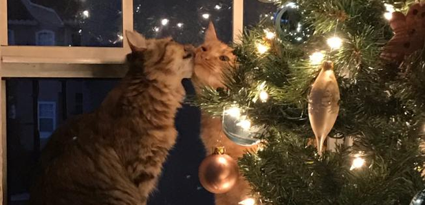 Cats kissing at a Christmas tree